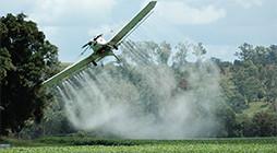 Manufacture of Pesticides - IT